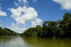 Rainforest. Jungle and river in the Amazon rainforest Royalty Free Stock Images