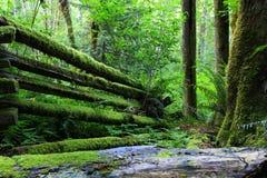 Rainforest. Moss rainforest park in British Columbia, Canada Royalty Free Stock Photo