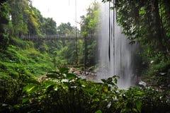 rainforest Royaltyfri Bild