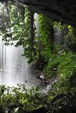 rainforest Royaltyfria Bilder