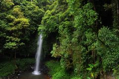 Rainforest Stock Photography