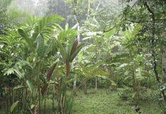 Rainforest. Tropical rain falling down in the rainforest Stock Photo