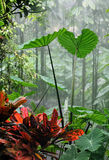 Rainforest. Photo of rainforest and some red plant in foreground Stock Photo