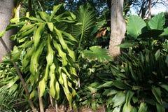 Free Rainforest Stock Photography - 4557502