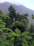 Rainforest. Wet dense lush vegetation in rainforest during wet season with mountains in background rain-forest Stock Photography