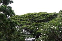 Rainforest royaltyfria foton
