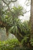 Rainforest Fotografering för Bildbyråer