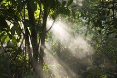 Rainforest. Sun beams in a rainforest Royalty Free Stock Photos