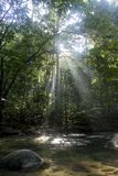 Rainforest. With sun rays and flare Stock Images