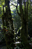 Rainforest. With sun rays and flare Royalty Free Stock Image