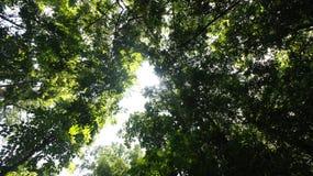 Rainforest Arkivbilder