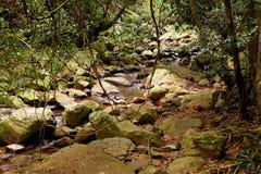 Rainforest. Forest, woods, hinterland, queensland, australia, rocks, stream, water, slippery, moss, trees, grass, ferns, stream, creek, overhang, vines, green stock image