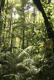 rainforest Arkivfoton