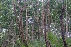 Rainforest Arkivfoton