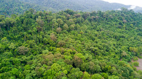 Rainforest aerial view Royalty Free Stock Photo