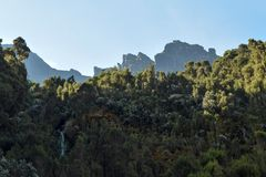 Rainforest against a mountain background. The dense rainforest of Rwenzori Mountains against a rock formations background, Rwenzori Mountains National Park stock photography