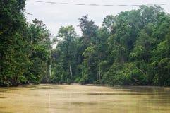 Rainforest along the kinabatangan river, Sabah, Borneo. Malaysi. A stock photos