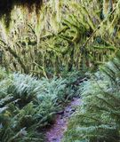 Rainforest along the Milford Track, New Zealand royalty free stock photography