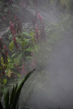 Rainforest atmosphere Royalty Free Stock Image