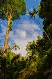 Rainforest, Australia. Subtropical rainforest in the Springbrook National Park Stock Images