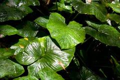 Rainforest background Stock Image