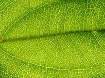 Rainforest Background 2 Stock Photography