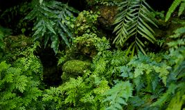 Rainforest Background Stock Images