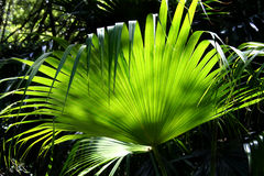 Rainforest Background 3 Royalty Free Stock Image