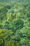 Rainforest Background Royalty Free Stock Photos