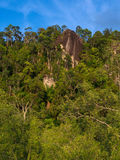 Rainforest in Bako Royalty Free Stock Images
