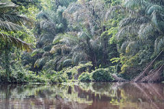 Rainforest on the banks of the tortuguero river in costa rica Royalty Free Stock Photos