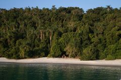 Rainforest Beach. Sandy Beach Next to Rainforest in Front of Blue Sky Stock Image