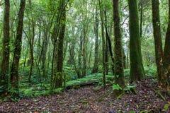 Rainforest. Beautiful rain forest at doi inthanon national park, Thailand Stock Photo