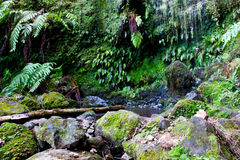 Rainforest. A beautiful tropical forest scene Royalty Free Stock Photography