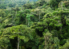 Rainforest. Beautiful tropical rainforest in Malaysia royalty free stock image