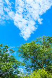 Rainforest and Blue Sky Royalty Free Stock Photos