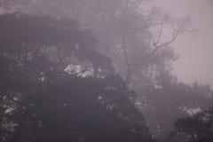 Rainforest of Borneo Stock Images
