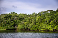 Rainforest, Brazil. Rainforest in Amazon, in  Brazil Royalty Free Stock Photography