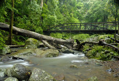Rainforest Bridge Royalty Free Stock Photos