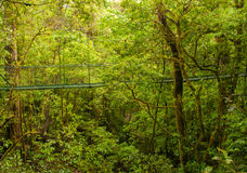 Rainforest bridge Royalty Free Stock Image