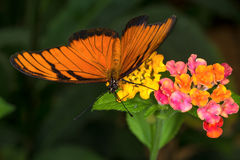 Rainforest butterfly is sitting on the tree leaf.  stock images
