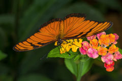 Rainforest butterfly is sitting on the tree leaf.  stock photos