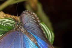 Rainforest butterfly is sitting on the tree leaf.  royalty free stock photos
