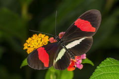 Rainforest butterfly is sitting on the tree leaf.  stock photo