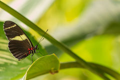 Rainforest butterfly is sitting on the tree leaf.  royalty free stock photo