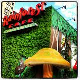 Rainforest Cafe Royalty Free Stock Photos