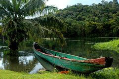 Rainforest canoe Stock Images