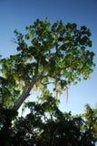 Rainforest canopy. In jungle of Yucatan, Mexico stock image