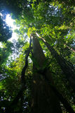 Rainforest canopy Royalty Free Stock Photo