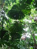 Rainforest Canopy Royalty Free Stock Photography
